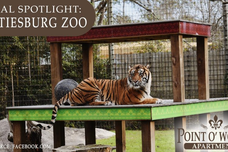 Local Spotlight: Hattiesburg Zoo